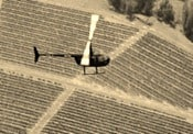 To Save Soggy Grapes, Winemaker Looks To Helicopter
