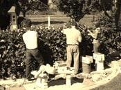 "Salisbury's ""Citizen Wine Pickers"" Bring in the Berries, Slowly."