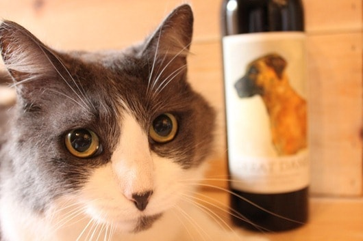 Great Dane Napa Cabernet 2008 - Maisy the cat is NOT impressed!