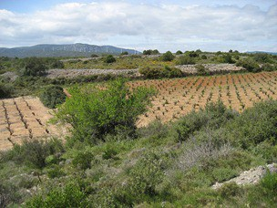Garrigue...it brings back many memories...