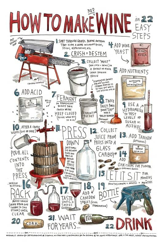 How to Make Wine in 22 Easy Steps!