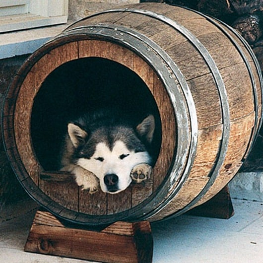 wine-barrel-dog-kennel