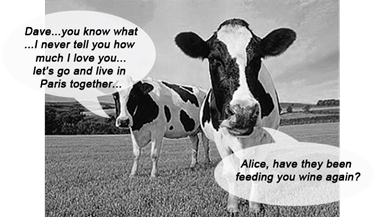drunk-wine-cows