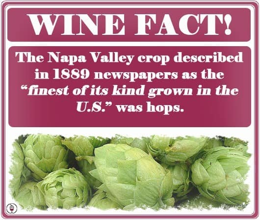 WINE-FACT-hops