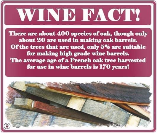 Wine-Fact-Oak-Wine-Barrels