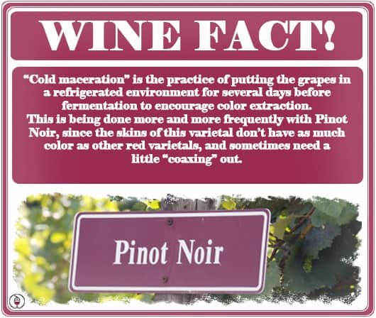 Cold-Maceration-Wine-Facts